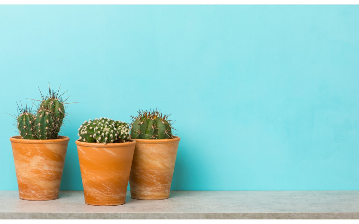 Repisas para cactus que puedes hacer por ti mismo