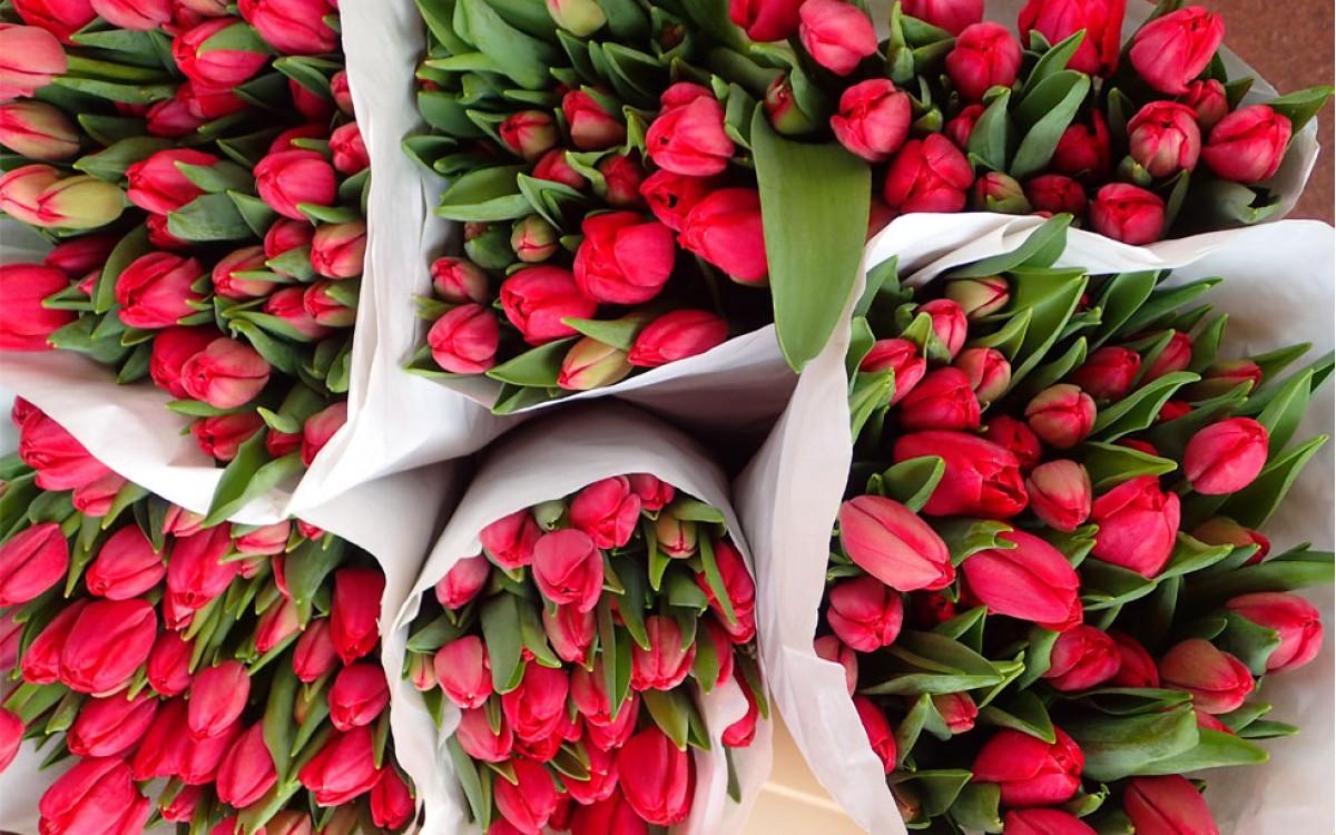 Tulipanes Rojos | Pasión y Amor