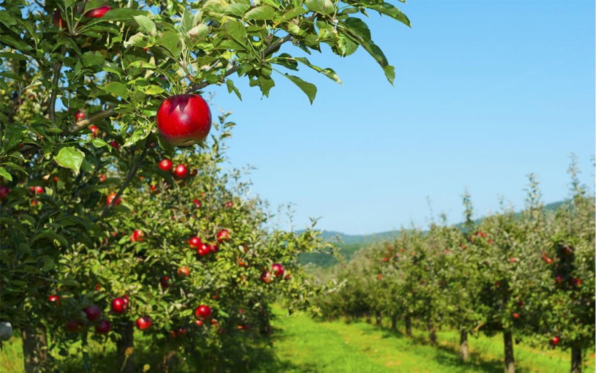 Árboles Frutales de fácil cultivo y abundantes frutos