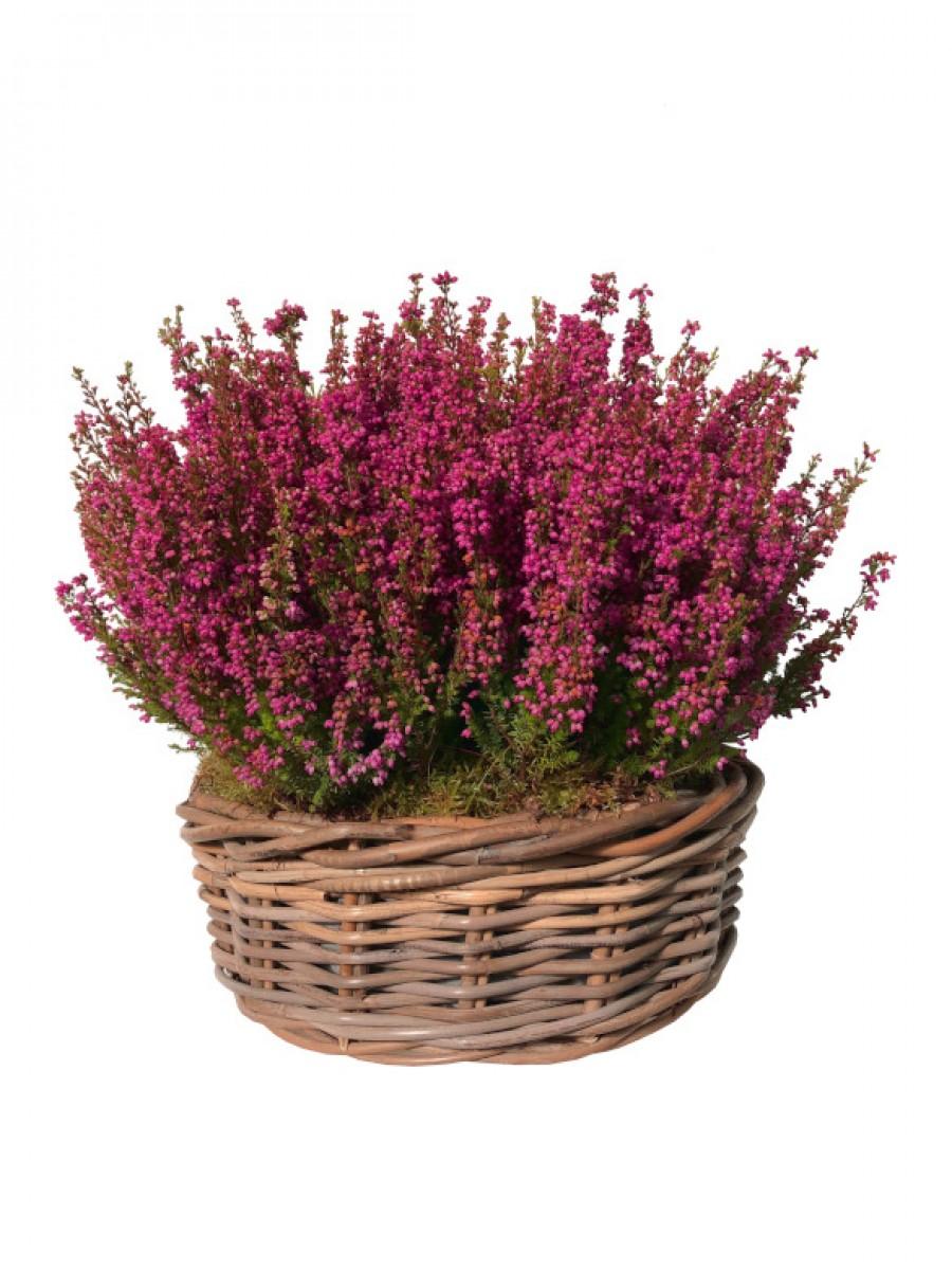 Brezos en cesta decorativa