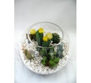 Centro de cactus en  cristal.