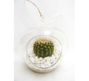 1 Cactus en jarrón de cristal colgante.