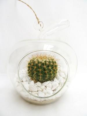 Cactus en jarrón de cristal colgante.