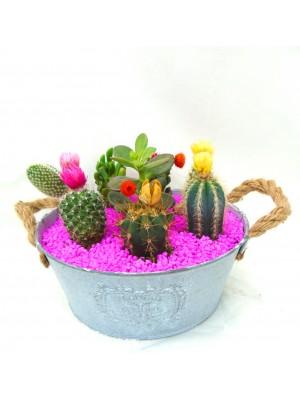 7 Cactus en maceta de laton.