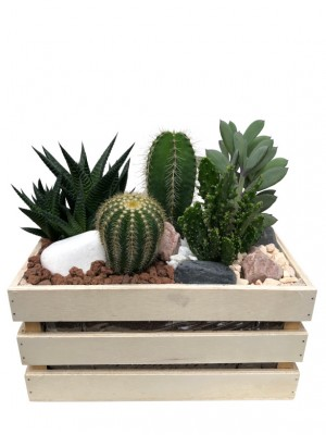 Centro de cactus en  madera.