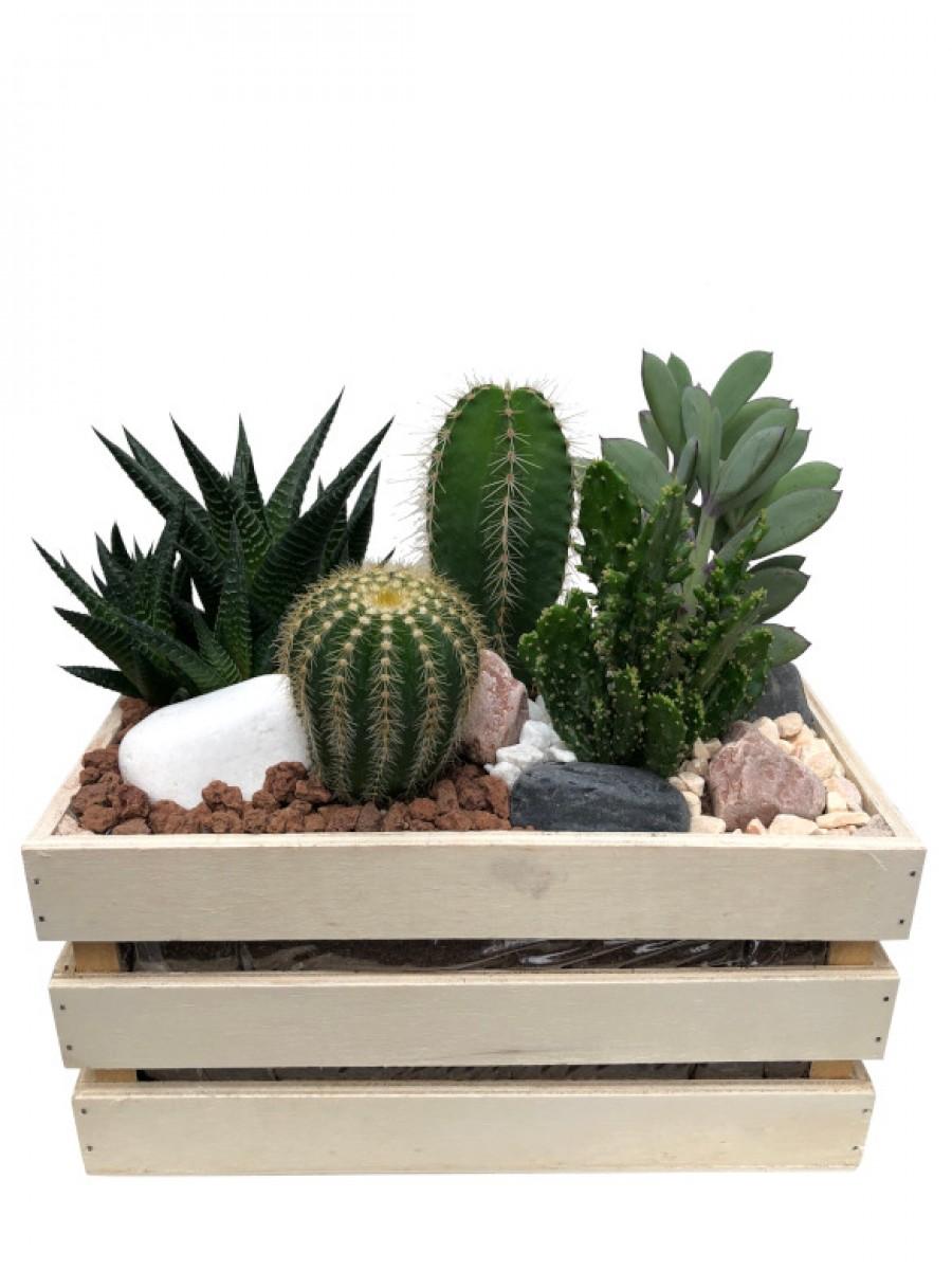 Centro de cactus en madera