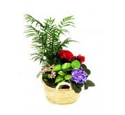 Capazo de plantas variadas