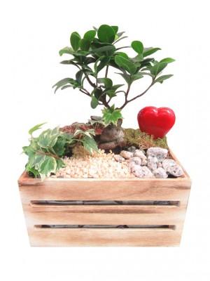 Composición con bonsai