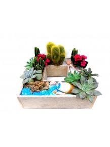 Mini jardin de cactus y plantas crasas.