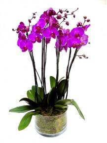 4 orquidea 2 vara vaso cristal