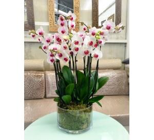 5 orquideas blancas centro morado en vaso cristal