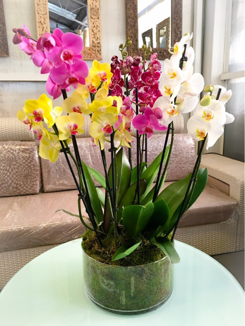 regalar flores orquídeas variadas en cristal