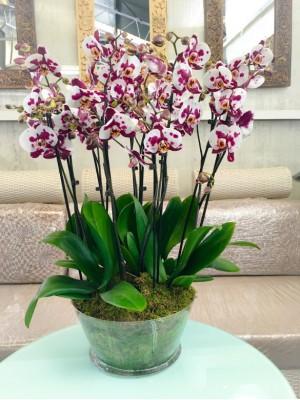 5 orquideas espectaculares en vaso cristal
