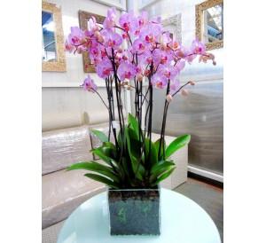 Centro de orquideas rosas rayadas