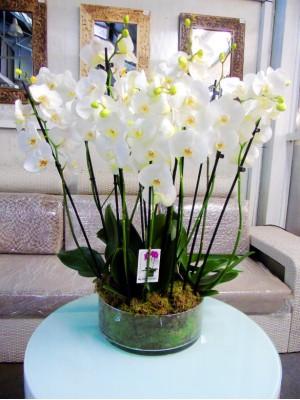 orquideas en cristal redondo (DISPONIBLE SOLO PARA MADRID)