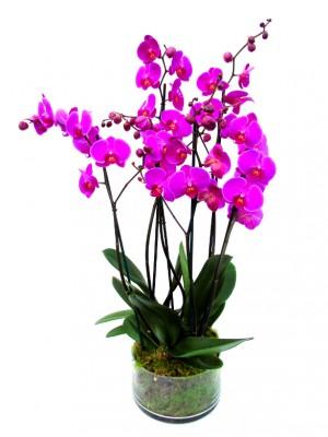 3 orquidea 2 vara vaso cristal