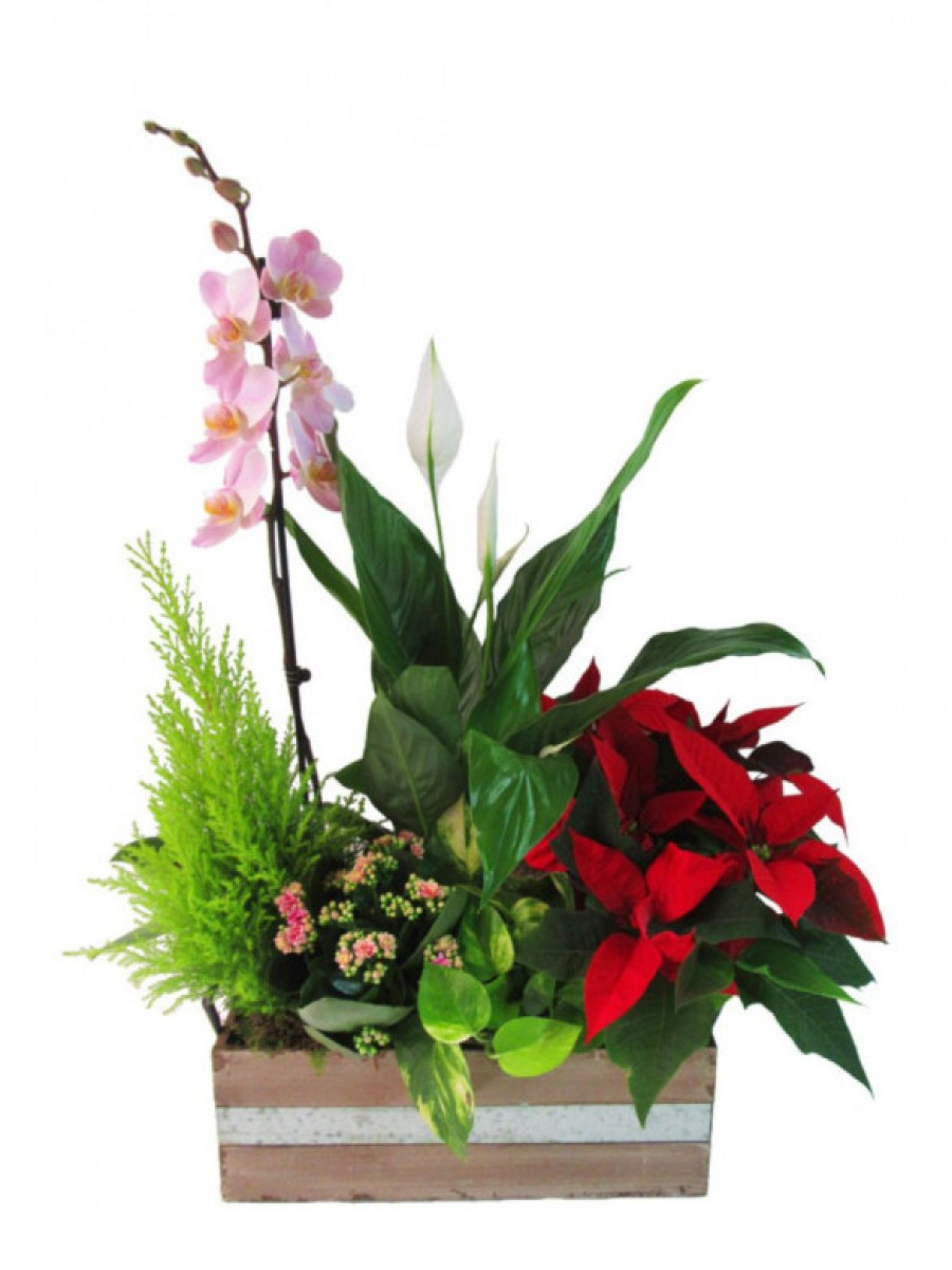 Centro de plantas en madera con orquídea (DISPONIBLE SOLO PARA MADRID)