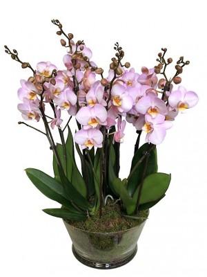 Centro de 5 orquideas rosas de 2 varas en cristal