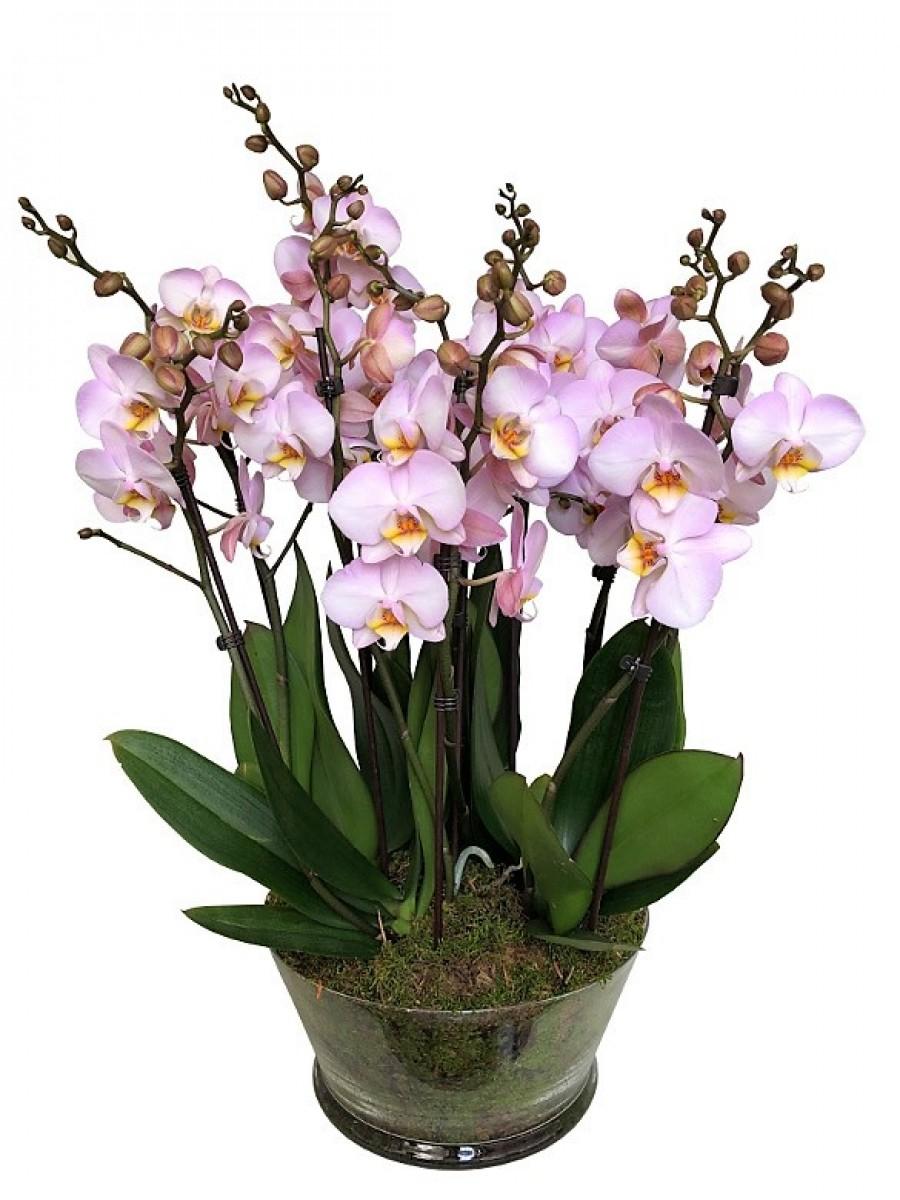 Centro de 5 orquídeas rosas de 2 varas en cristal