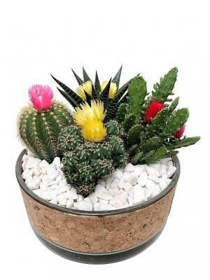 Cactus en cristal