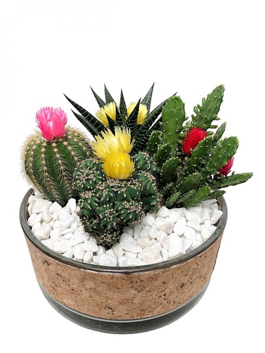 Centro de cactus en cristal