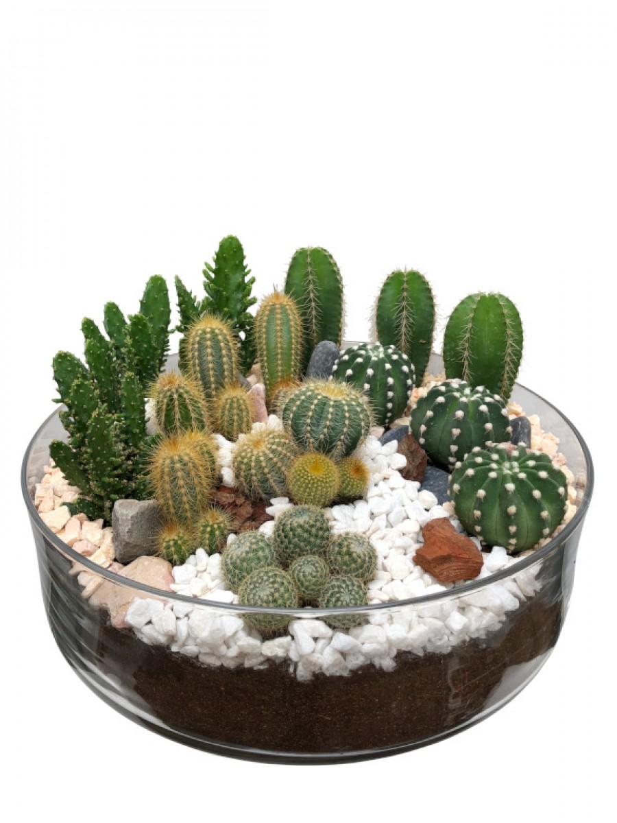 Centro grande de cactus  en cristal