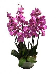 Centro de orquideas rosas