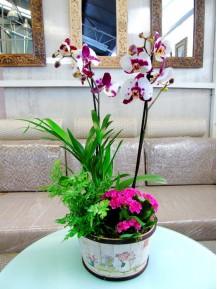 Cesta de Plantas variadas con orquidea