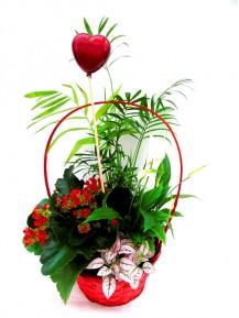 Cesta de plantas San Valentin