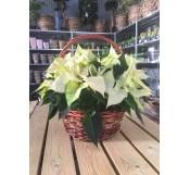 Cesta de flores de pascua blancas