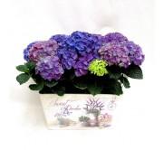 Cestas de hortensias azules en laton