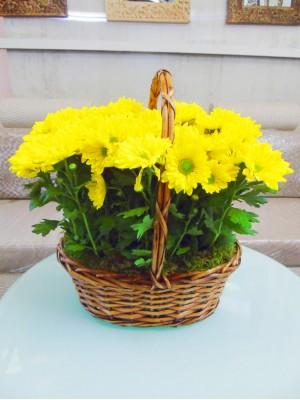 cesta de margaritas amarillas