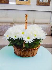 1 cesta de margaritas blancas