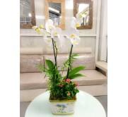 Cesta de orquidea blanca con plantas variadas