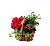 Cesta de flores de pascua en cesta