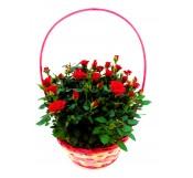 Cesta de rosales rojos