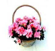 cesta de una azalea
