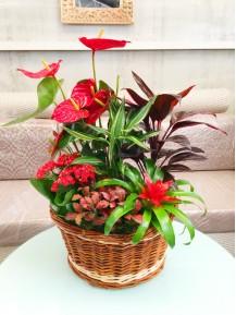 Cesta de plantas flor