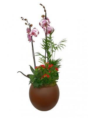 Maceta de cerámica con orquídea y plantas variadas