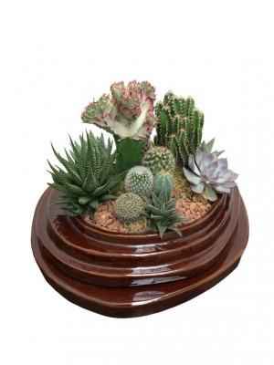 Composición de cactus en cerámica