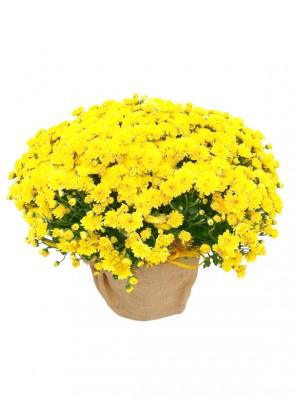01 Crisantemo amarillo arpillera