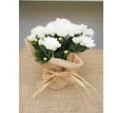 01 Crisantemo Blanco M12 Arpillera