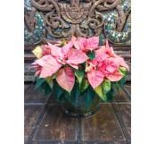 Centro de  mesa poinsettias rosas