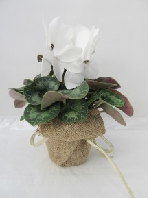 1 cyclamen decorado