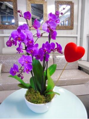 2 orquidea moradas en ceramica
