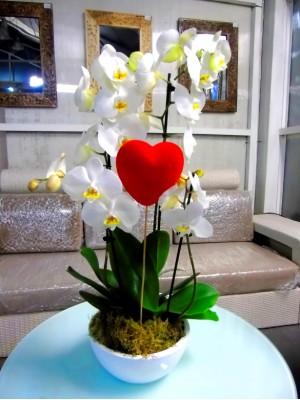 2 orquidea blancas en ceramica