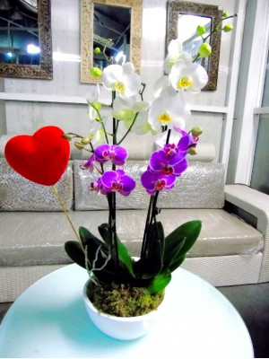 2 orquidea 2 vara en ceramica