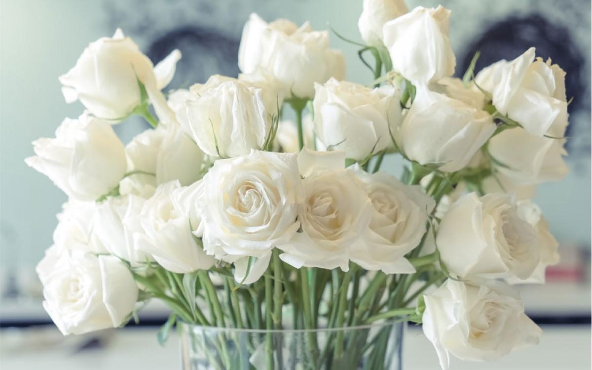 Pureza e inocencia concentradas al regalar unas Rosas Blancas
