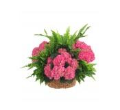 Cestas de hortensias con helechos