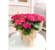 Cestas de hortensias rosas en arpillera
